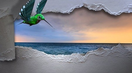 hummingbird-3347576__250